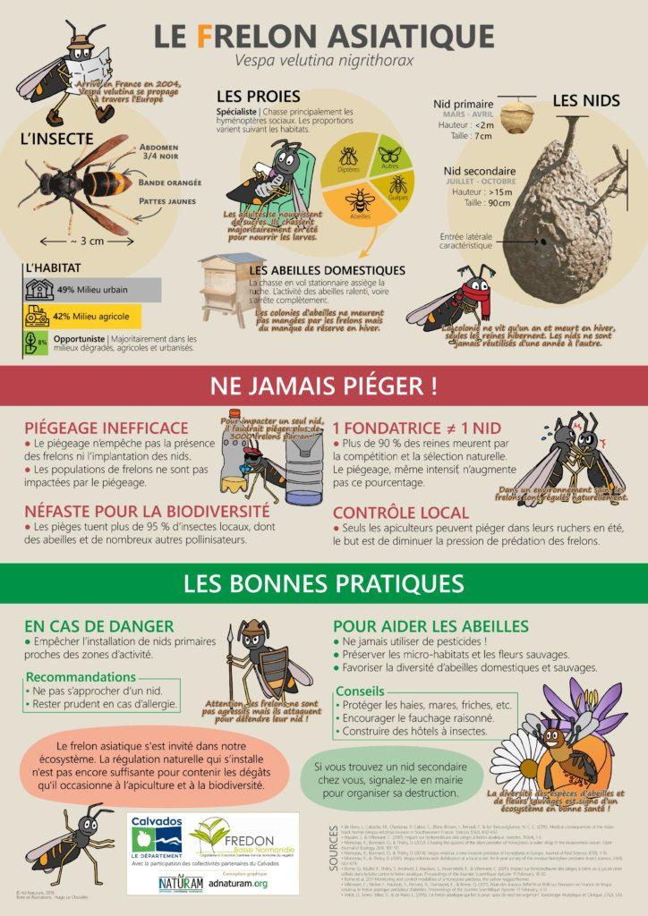 Lutte contre les frelons asiatiques à Verson avec le Département du Calvados et la FREDON